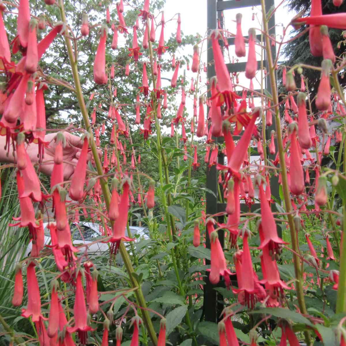 36 Décoration florale pour des évènements (mariage, anniversaire, etc.) | Aux Quatre Saisons à Boissy-Saint-Léger