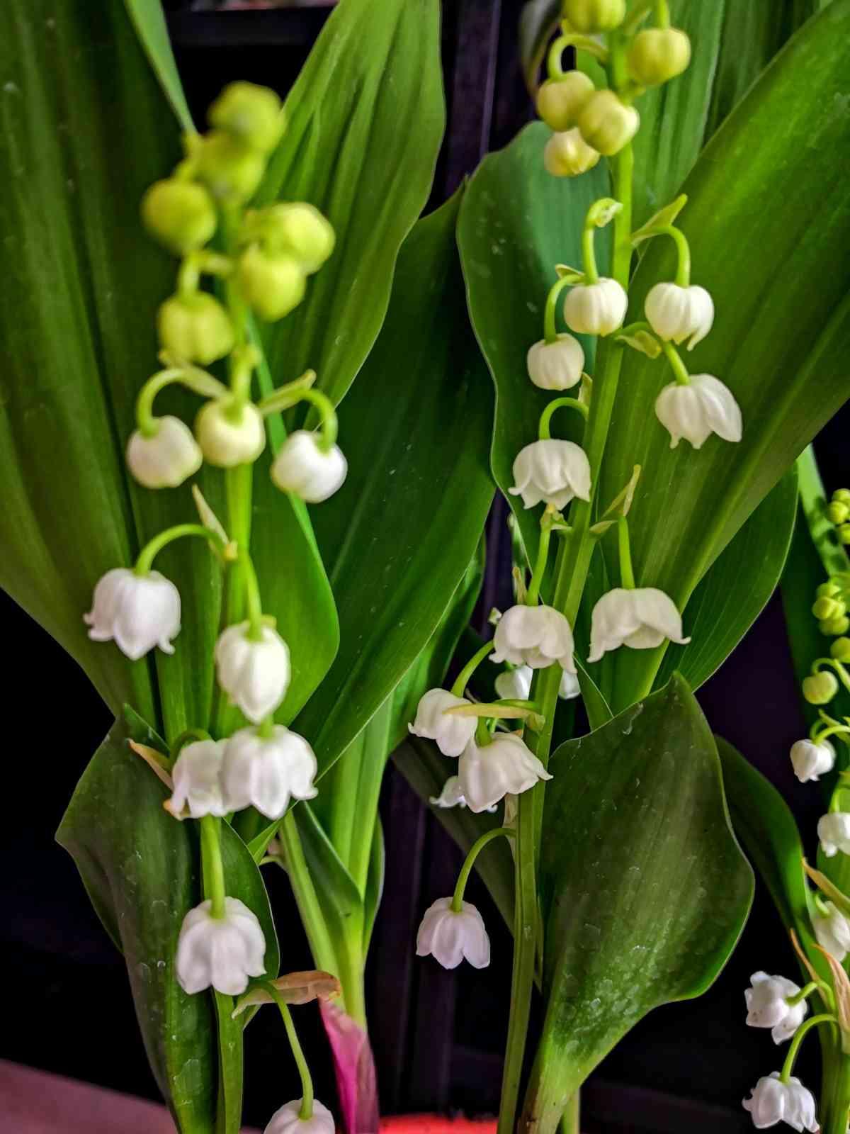 53 Décoration florale pour des évènements (mariage, anniversaire, etc.) | Aux Quatre Saisons à Boissy-Saint-Léger